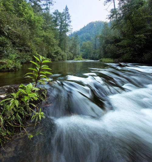 Fine art stock photograph of North Carolina's Chattooga River at dawn. Early morning brings a tranquil atmosphere to these wild forests.