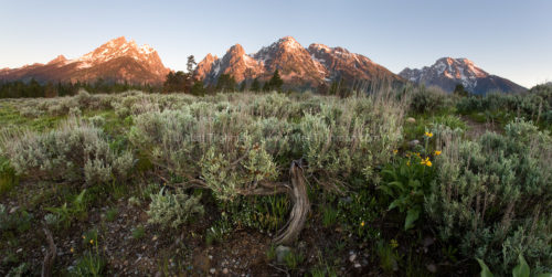 Fine art stock photograph of the Grand Tetons, in Wyoming. The sheer mountain faces rising steeply from the flat plains provides the perfect backdrop for sunrise.
