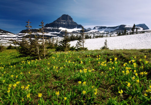 Fine art stock photograph of Logan Pass, in Glacier National Park, Montana. At altitudes this high, winter snow and spring flowers remain long into summer.