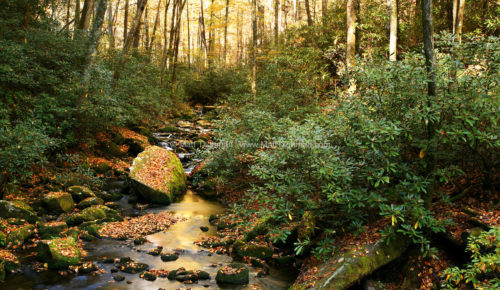 Fine art stock photograph of a North Carolina stream in autumn. The forest was full of sounds, from the babbling creek to creatures rustling in the fallen leaves.
