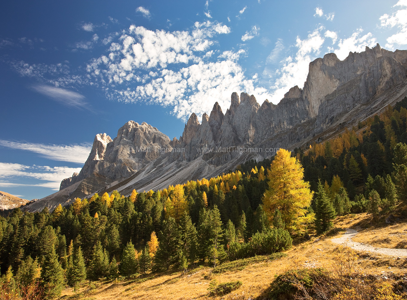 Fine art stock photograph of the Odle group of mountains in the Dolomites of Italy. The European Larches at this elevation are among the first to change color.